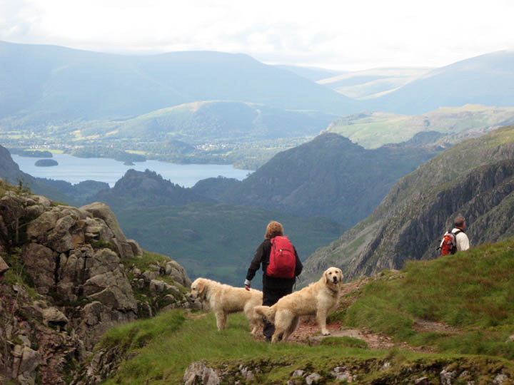 Places To Take Your Dog For The Day